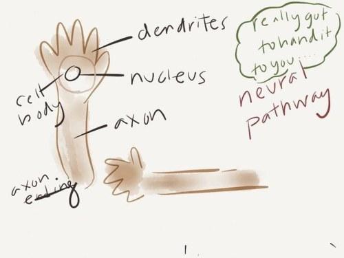 neural-pathways